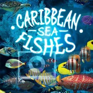 Caribbean Sea Fishes Key Kaufen Preisvergleich