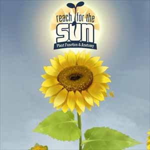 Reach for the Sun Key Kaufen Preisvergleich