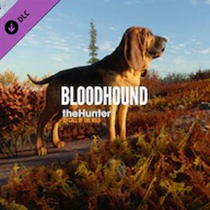 Kaufe theHunter Call of the Wild Bloodhound Xbox One Preisvergleich