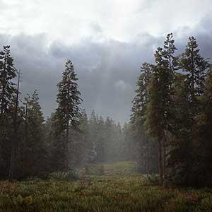 die Wüste und die Wälder