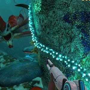 Tauchen Sie ein in eine große Unterwasserwelt