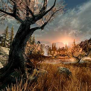 The Elder Scrolls 5 Skyrim VR - Wald