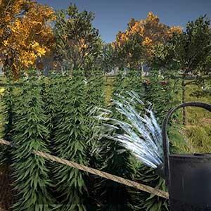 gießen Sie Ihre Pflanzen